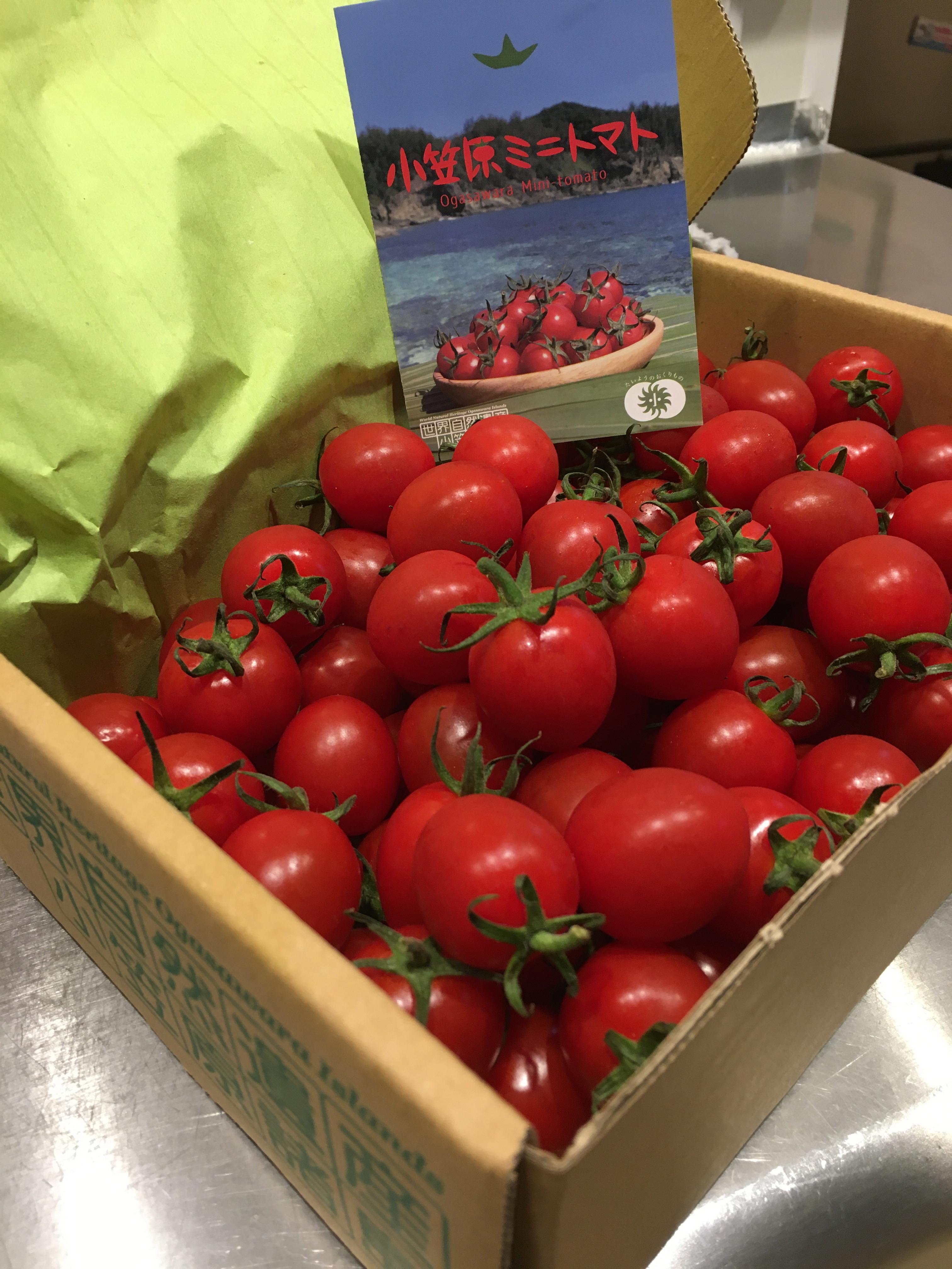 小笠原母島よりミニトマトが届きました!