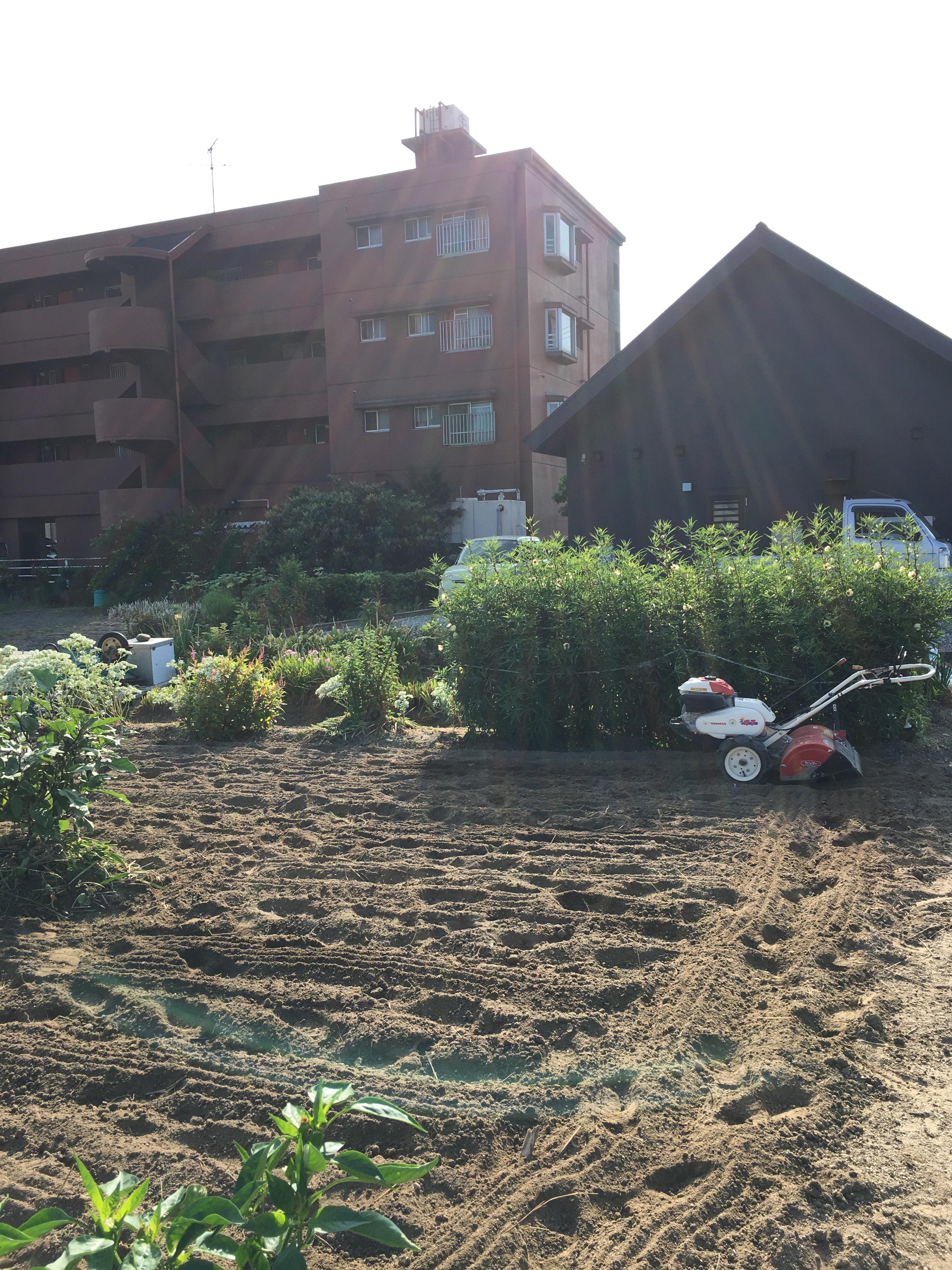 秋の収穫の準備 続き 「シェフは畑仕事初心者です」